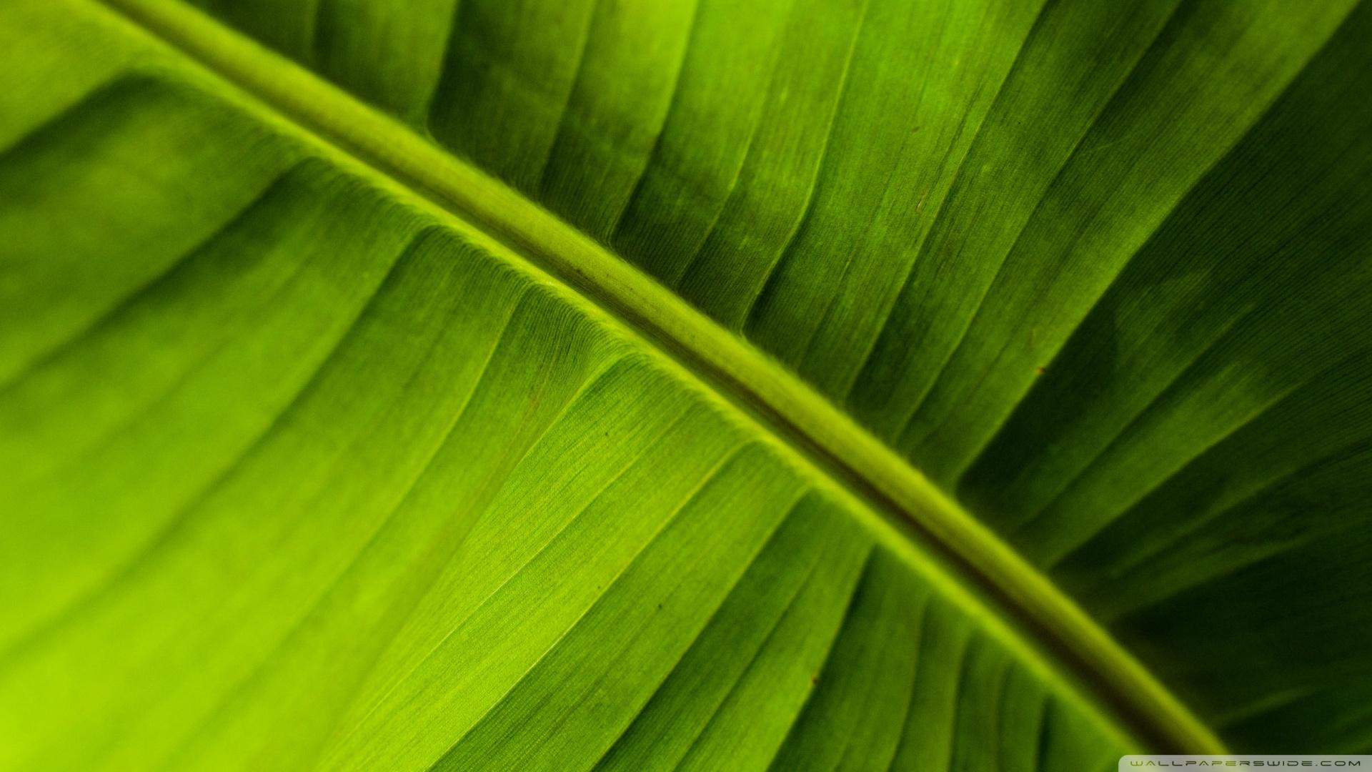 Banana Leaf Wallpaper 1920x1080 Banana Leaf 1920x1080
