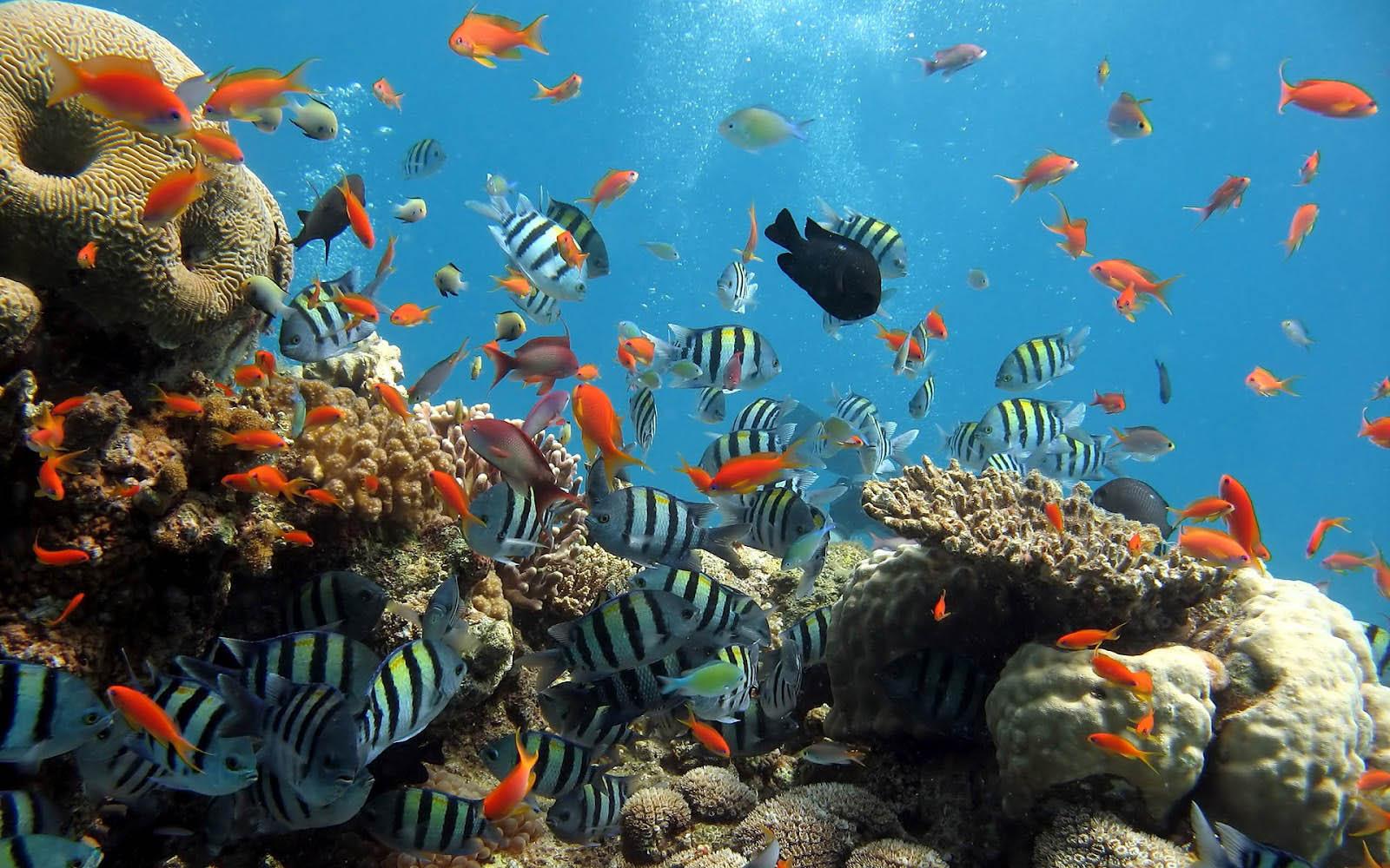 Ocean Life Desktop Wallpaper
