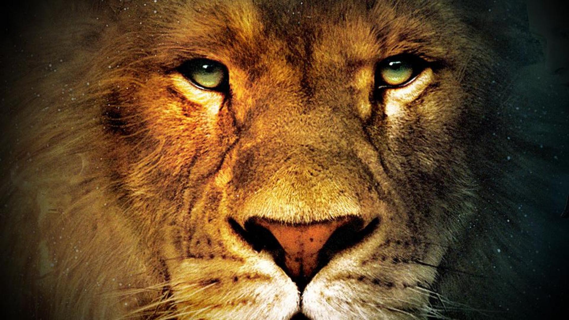 Lion Face Wallpaper 1920x1080
