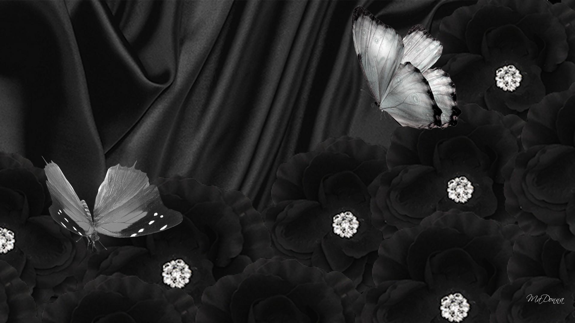 44 Black Butterfly Background Wallpaper On Wallpapersafari