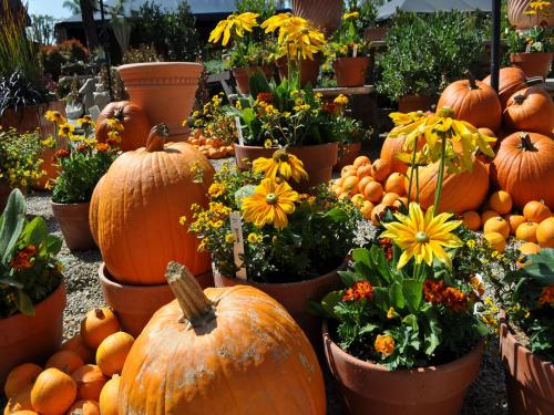free pumpkin destkop screensaver screensavers download pumpkin 500x375
