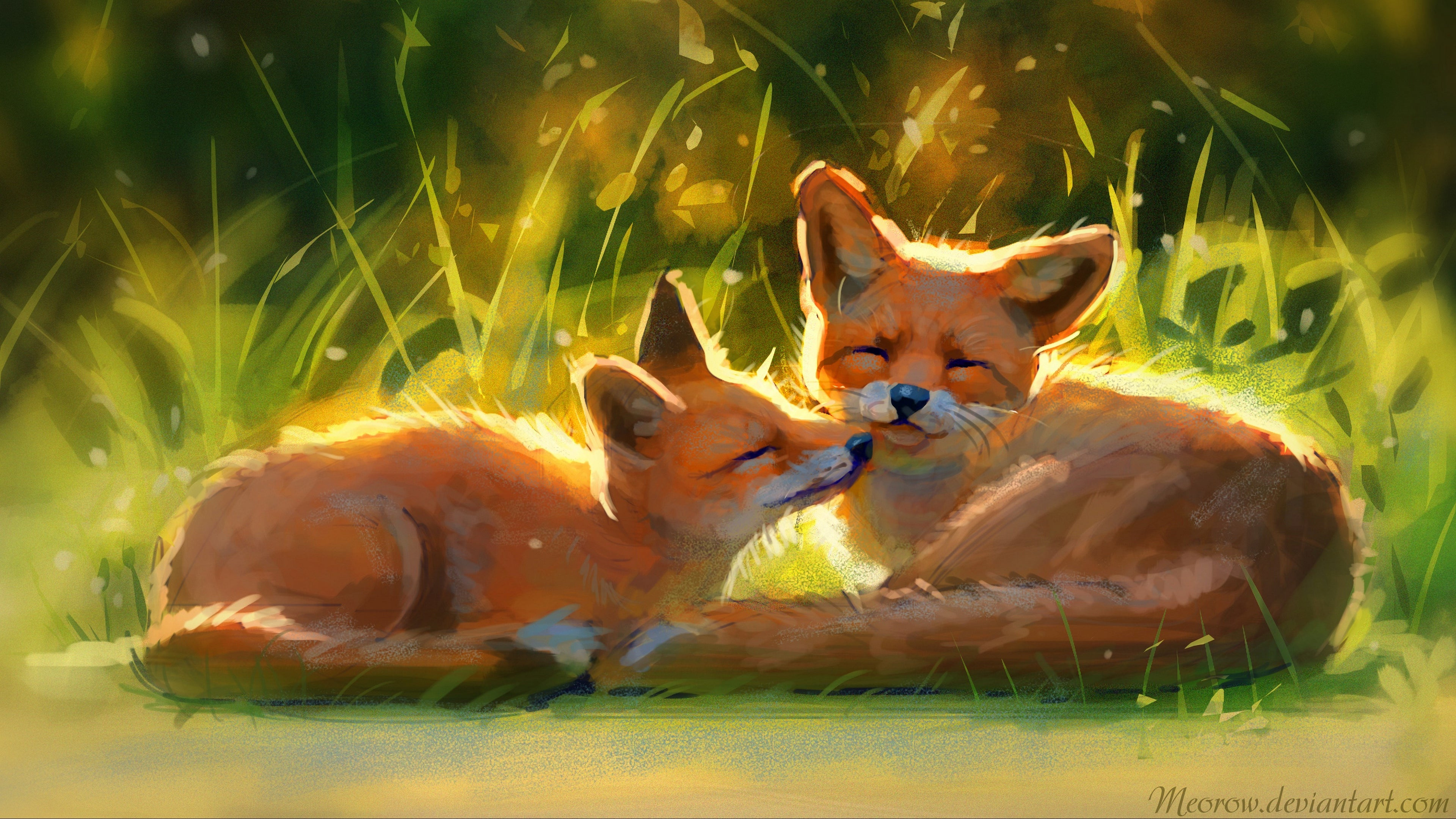 Cute Foxes 4K wallpaper 3840x2160