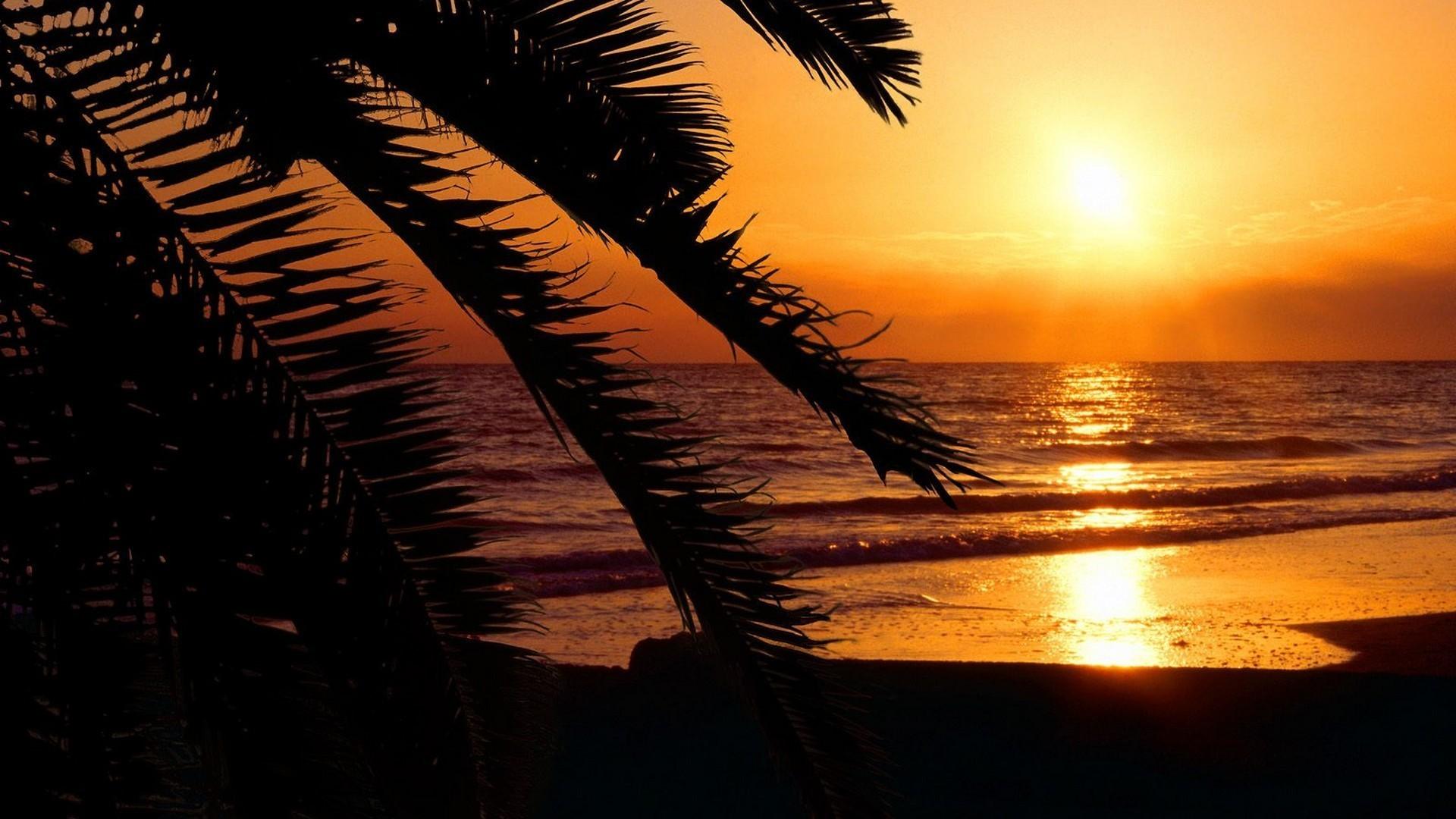 Florida beaches palm trees silhouettes sunset wallpaper AllWallpaper 1920x1080