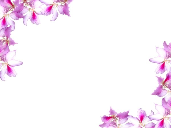 Floral Border 10 Floral border on blank page Lots of copyspace Not 600x450