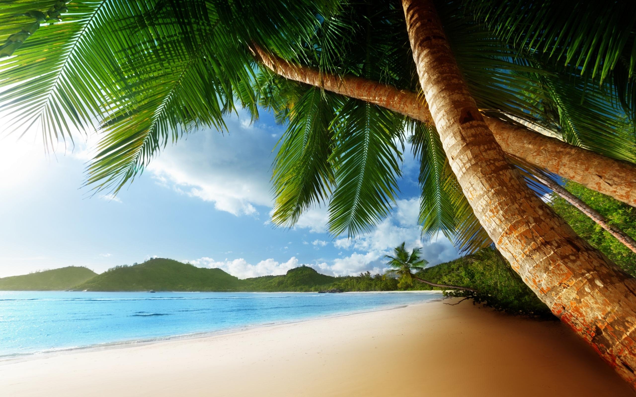Exotic Island Beach Palm Trees Ocean widescreen wallpaper 2560x1600