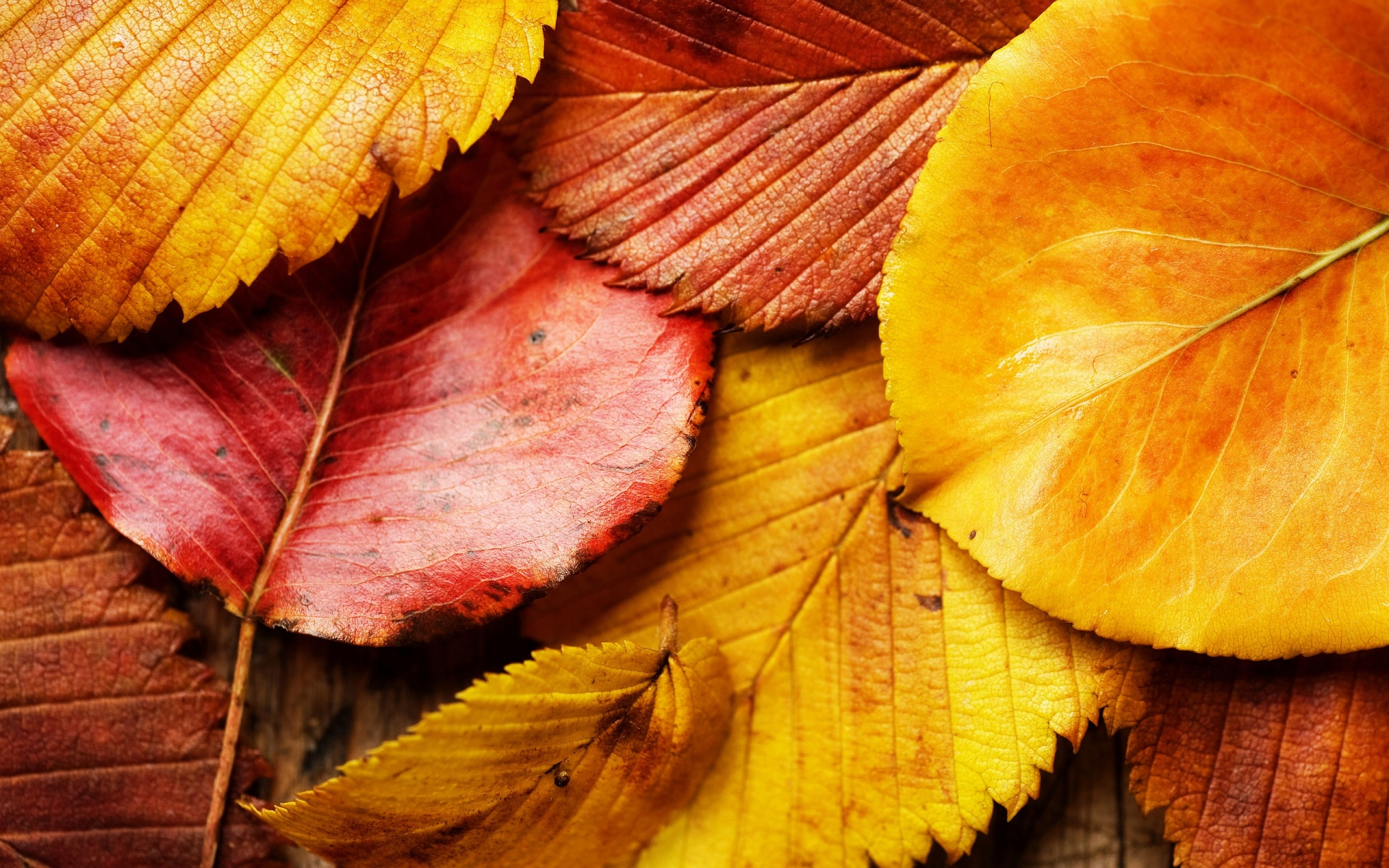 Wallpaper Autumn Leaves Background 1920x1200