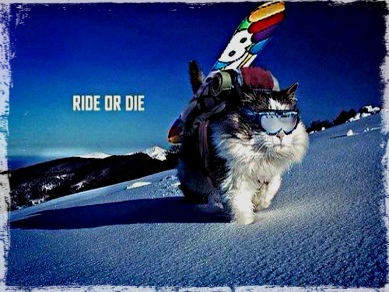 Free Download Snowboarding Snowboarding Wallpaper 32901516