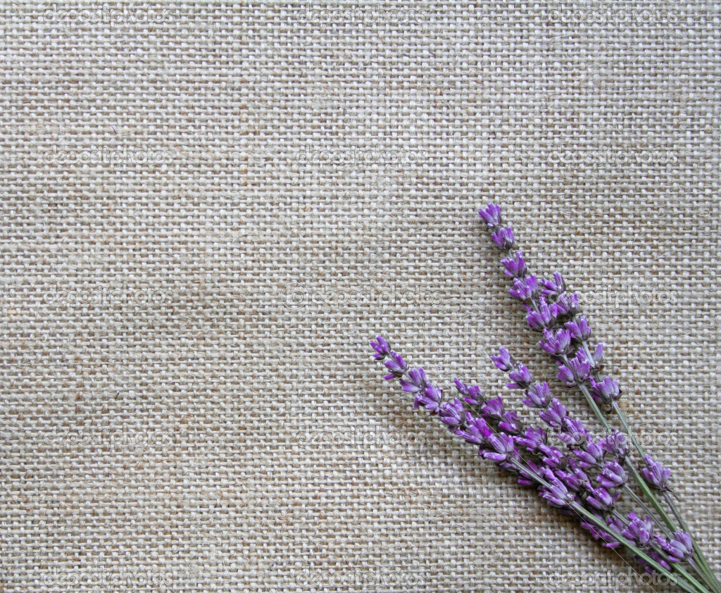Lavender Flowers Wallpapers HD Freetopwallpapercom 1024x842