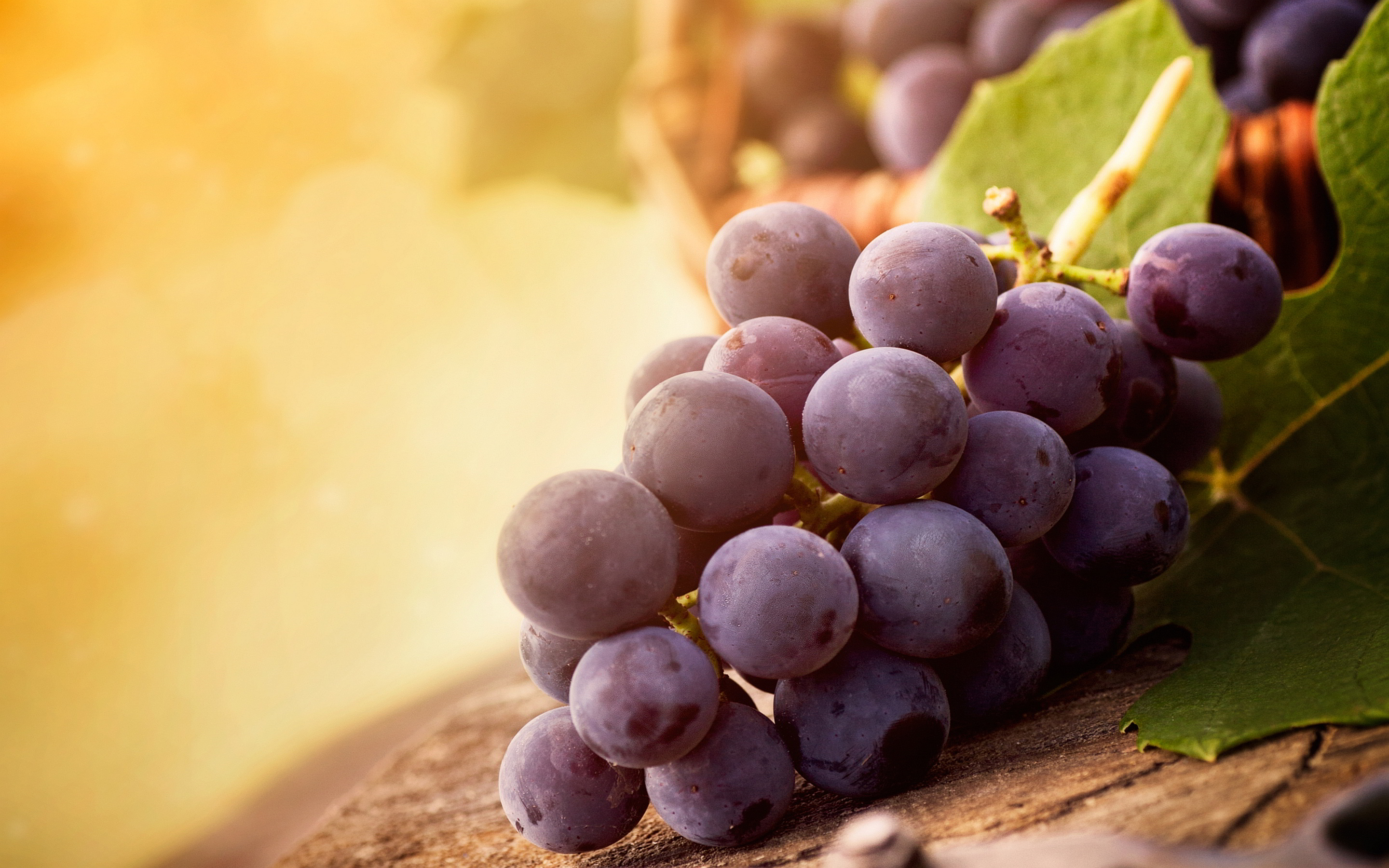 Grapes Fruit Wallpaper HD Desktop Images One HD 2880x1800