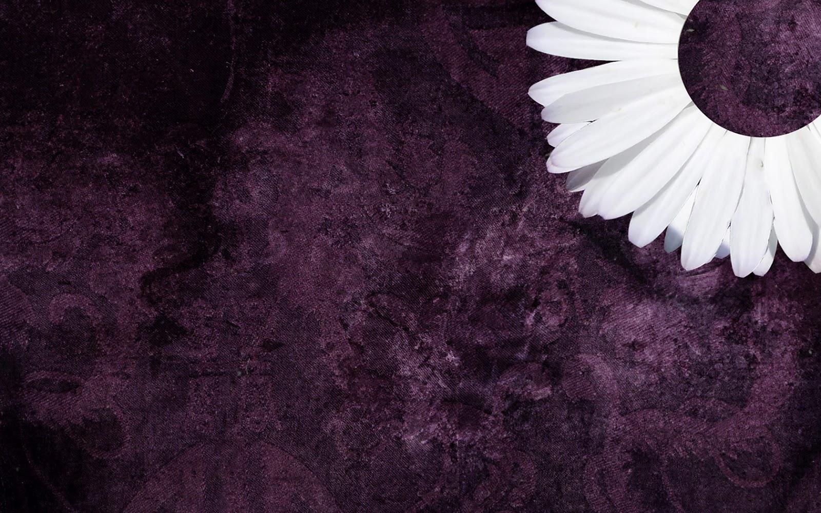 Purple Daisy Tumblr Backgrounds   ibjennyjenny Photography and 1600x1000