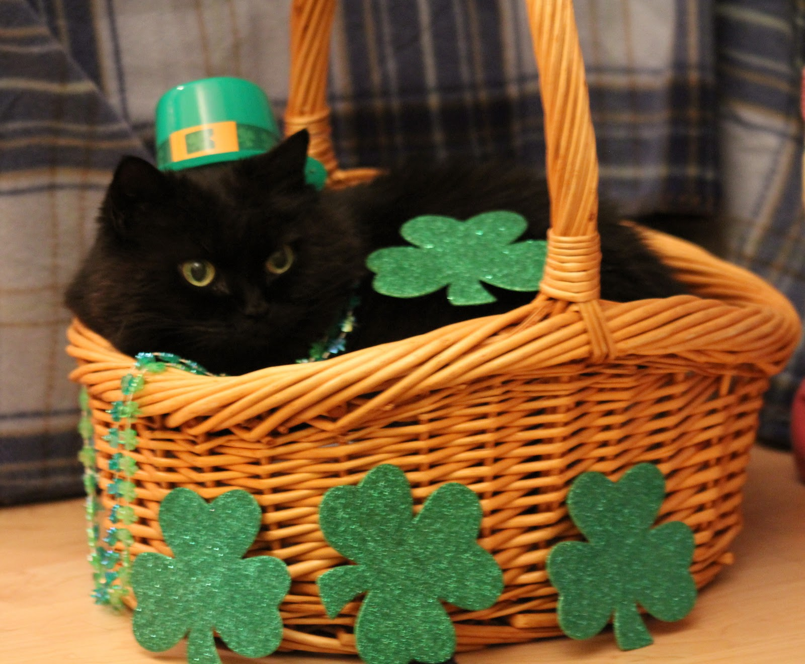 36] St Patricks Day Cat Wallpaper on WallpaperSafari 1600x1320