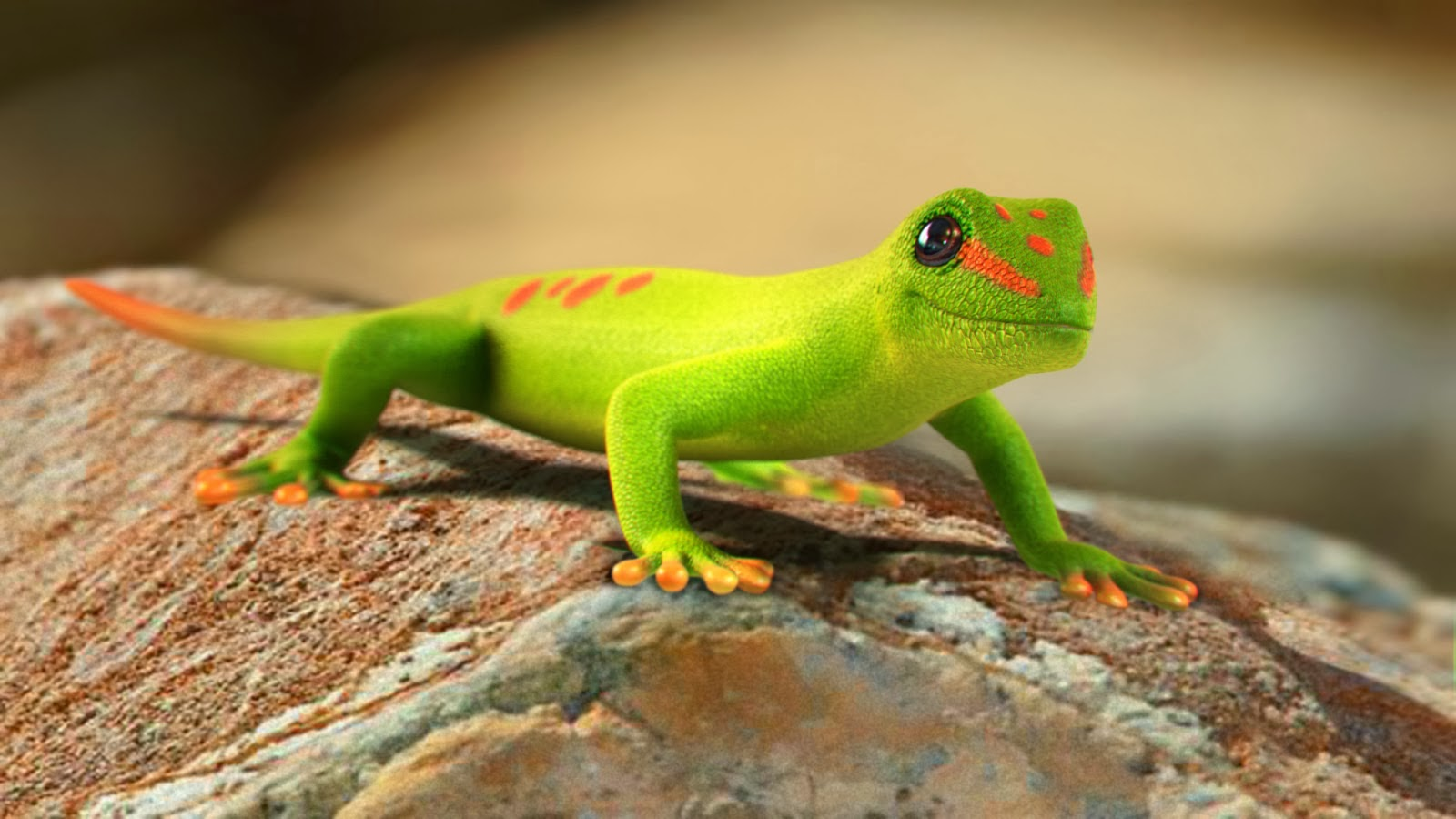 Gecko Wallpapers Desktop 1600x900   4USkY 1600x900