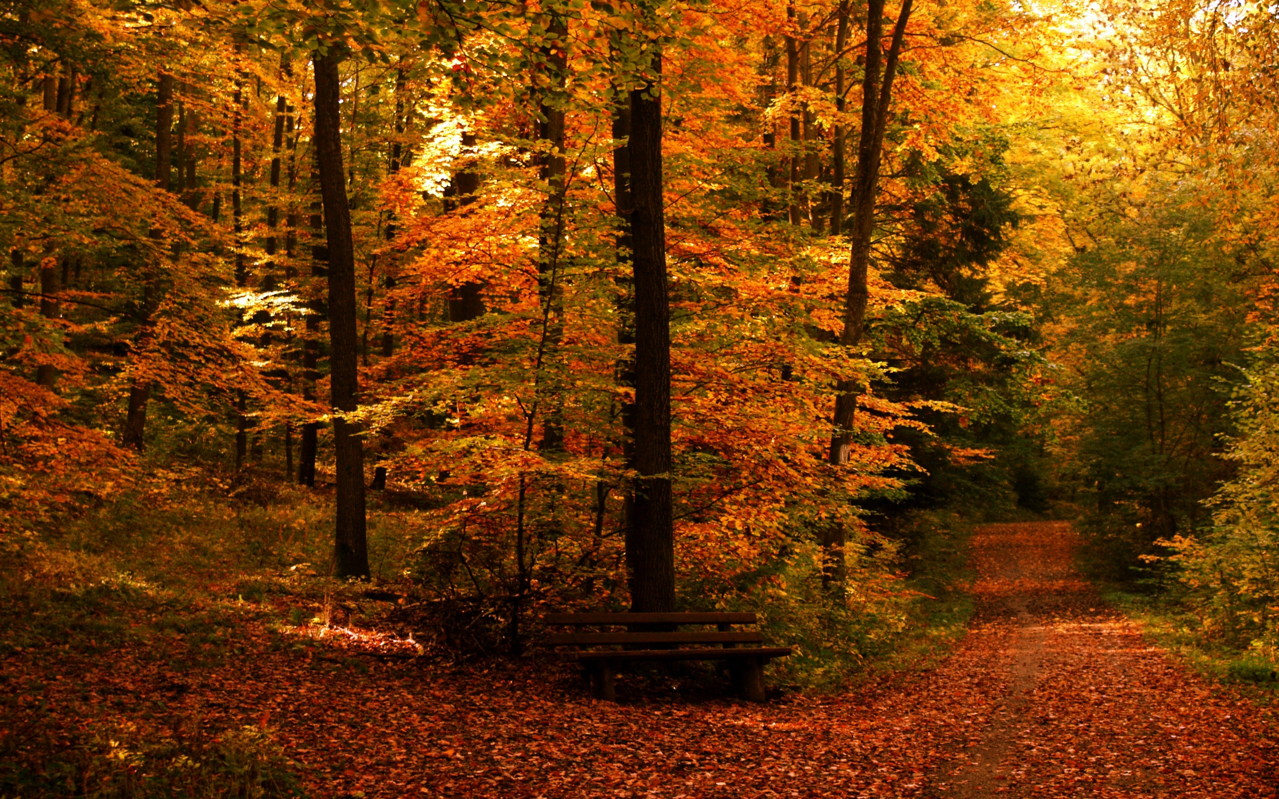 URL httpmi9comautumn free wallpaper autumn path 93126html 2560x1600