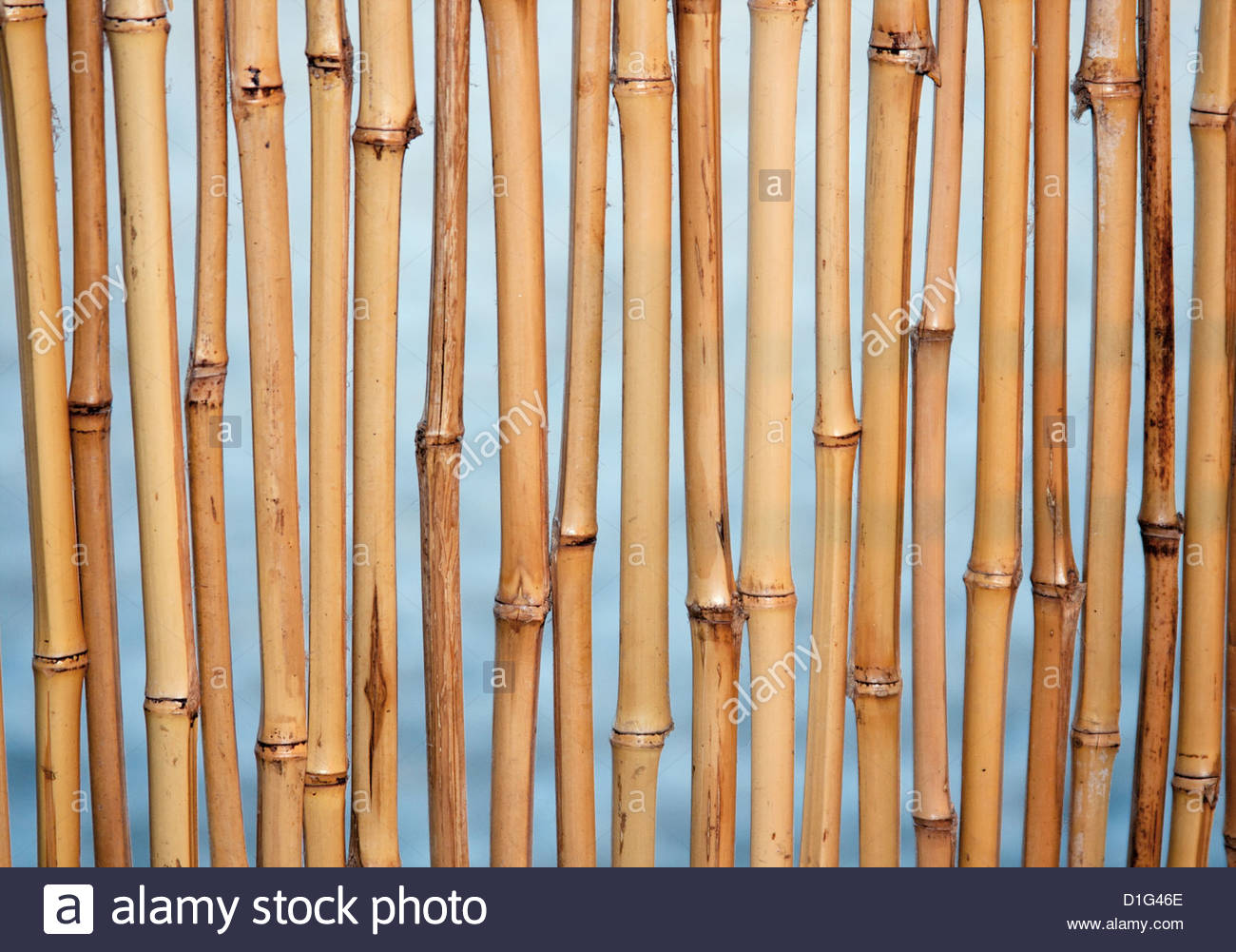 Bamboo background texture with columns of wood Stock Photo 1300x1001