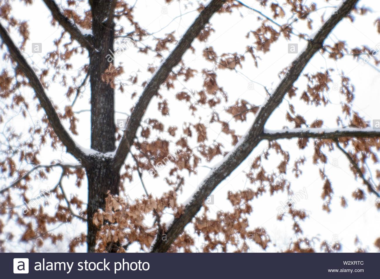 Twigs Soft Wood Stock Photos Twigs Soft Wood Stock Images   Alamy 1300x955