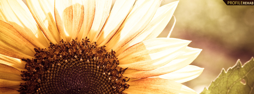 Beautiful Sunflower Photography Facebook Cover Preview 850x315