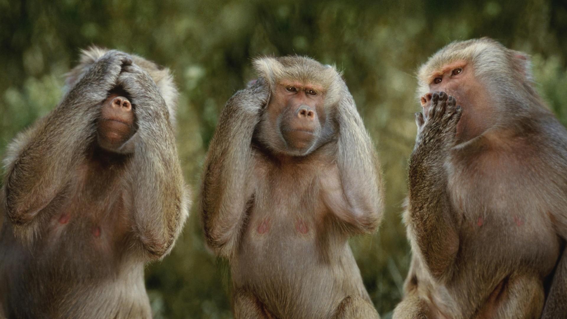 see no evil monkeys Wallpaper Background 3877 1920x1080