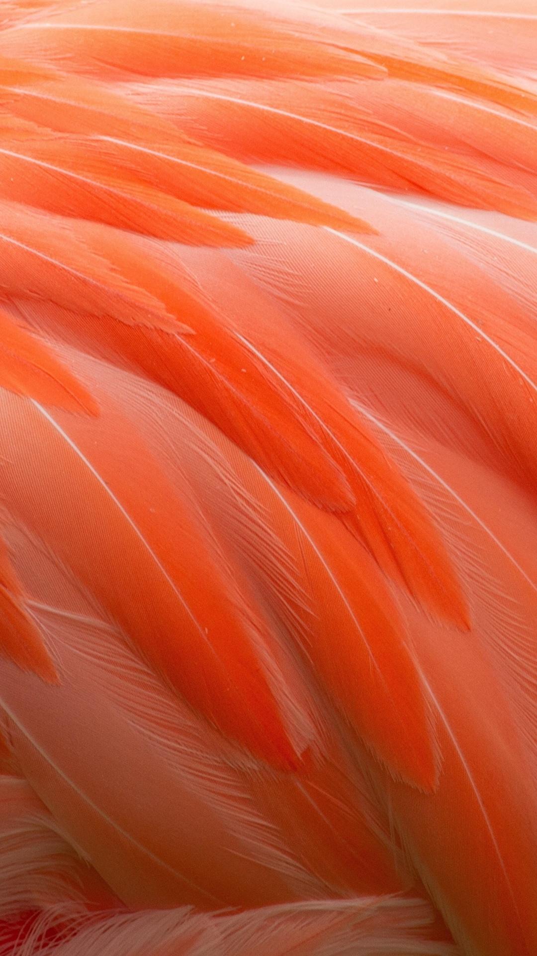 Wallpaper Flamingo Orange Macro Feathers 1080x1920 1080x1920