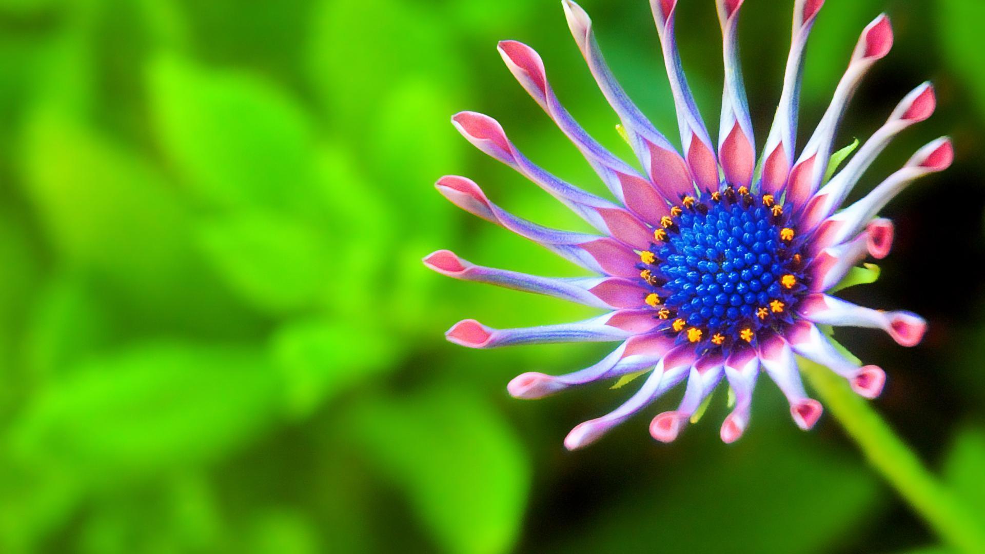 Free Download Flower Desktop Wallpapers Hd Download