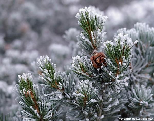 Christmas Nature 02 600x470
