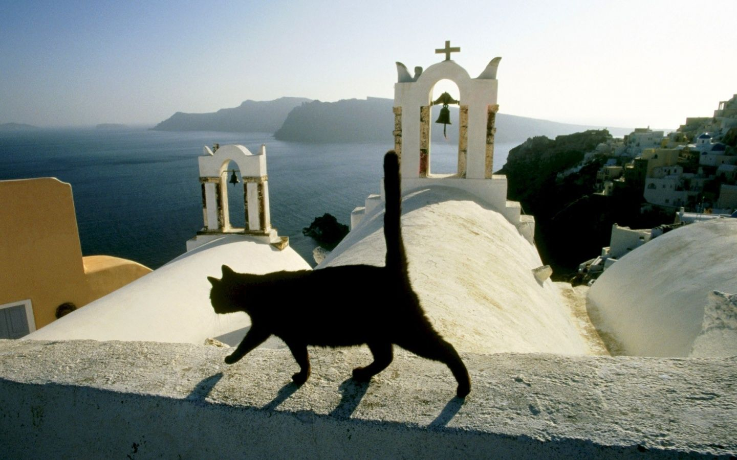 church cats Greece Creatures of the Street Cats Feral cats 1440x900