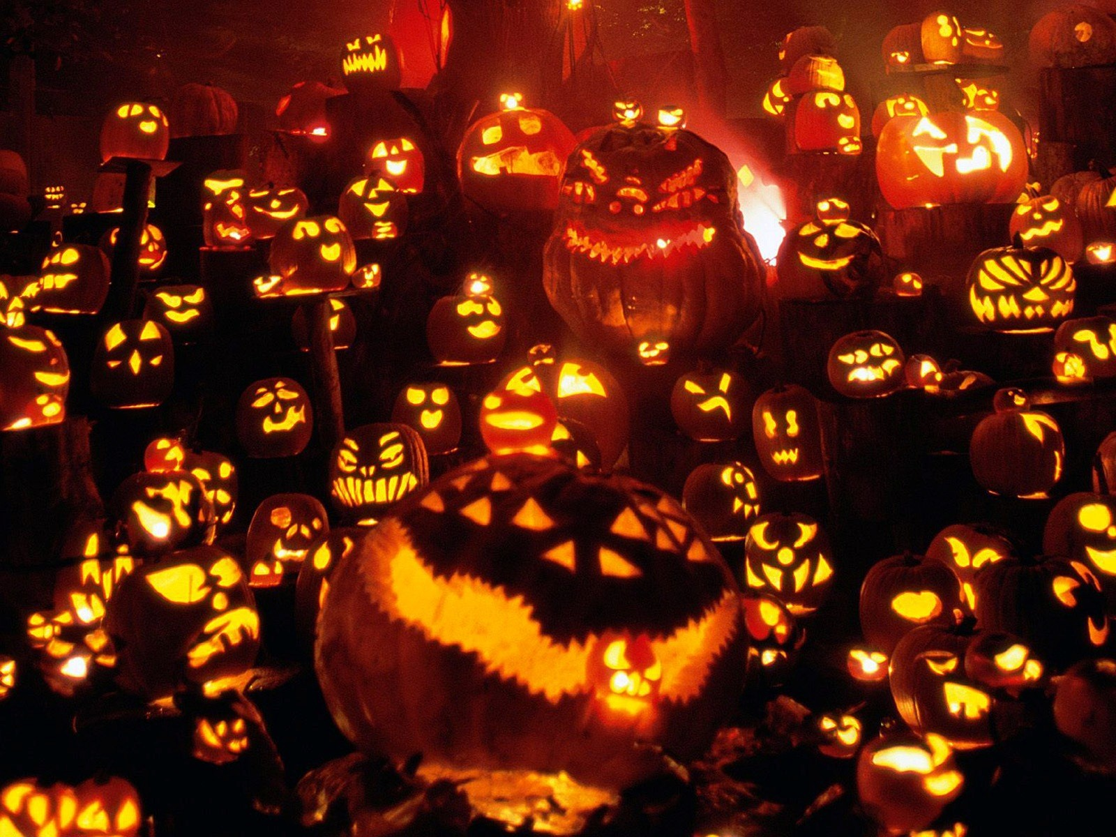 Halloween Pumpkins Festival HD Wallpaper HD Wallpapers 1600x1200
