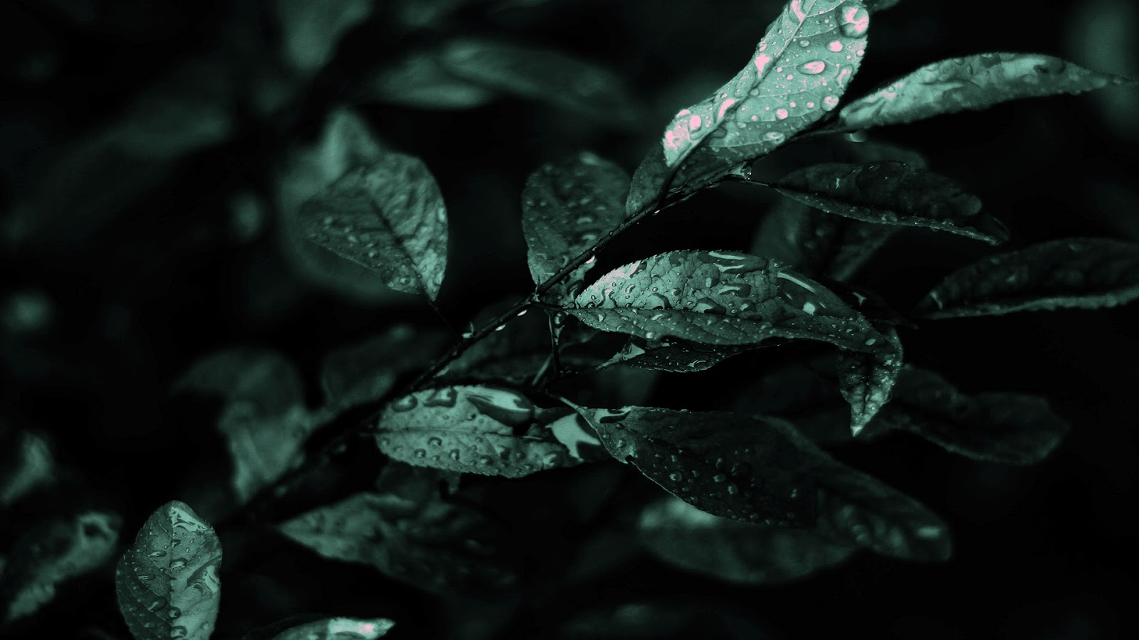 Free Download Abstract Dark Nature Hd Wallpapers 1600x900 For