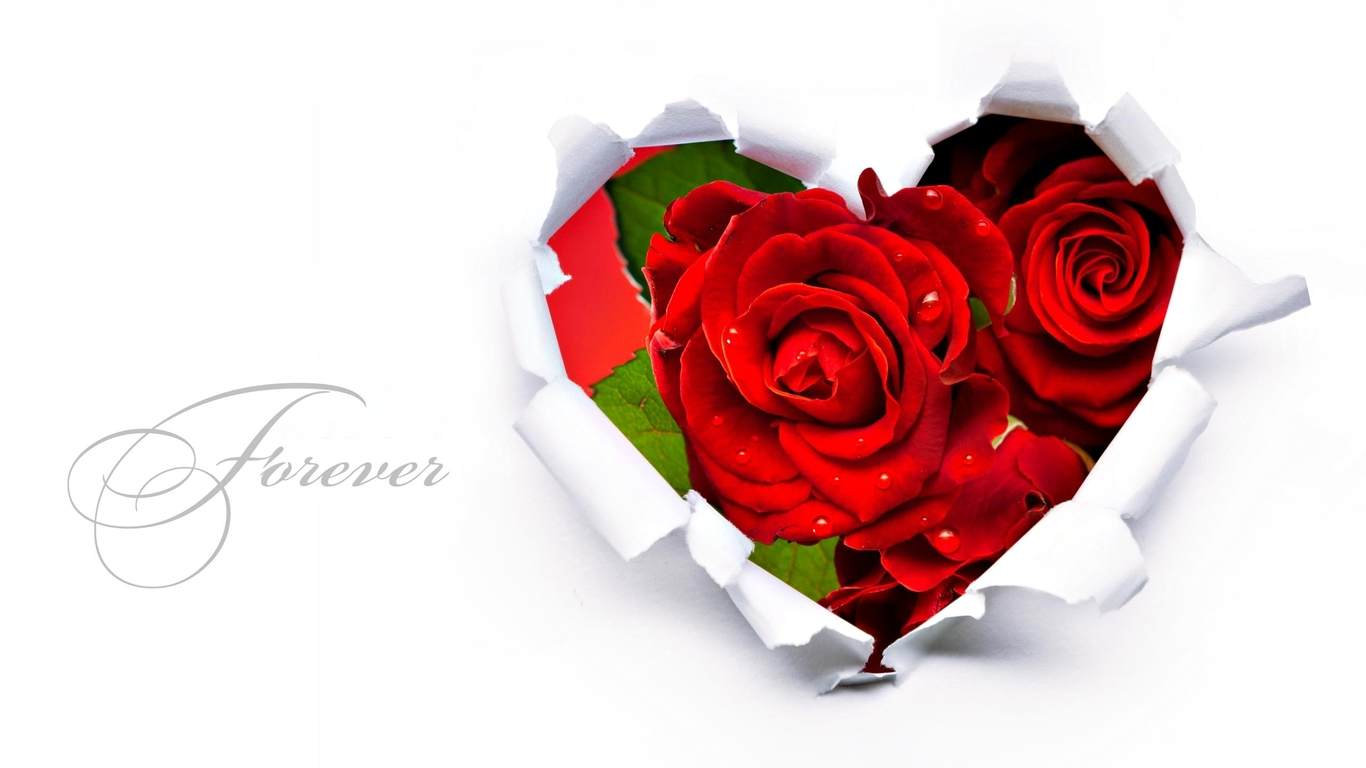 Love HD Wallpapers with Rose Flowers Heart Red HD Wallpapers Rocks 1366x768
