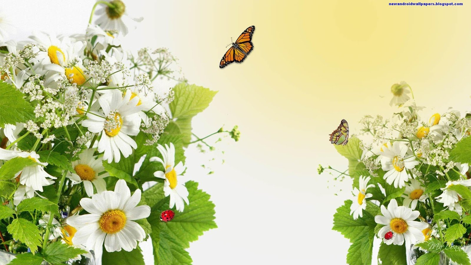 Beautiful Flowers Butterfly HD 2013 Wallpapers For Android And Desktop