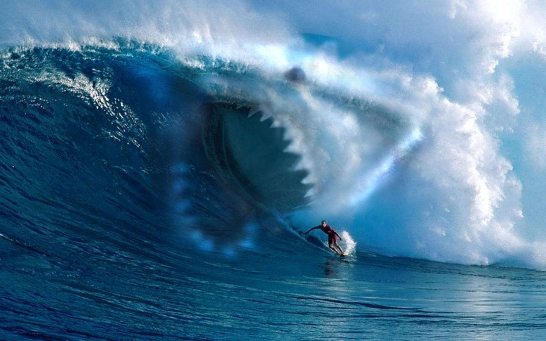 Love Killer Hd Wallpaper : HD Shark Wallpapers - WallpaperSafari