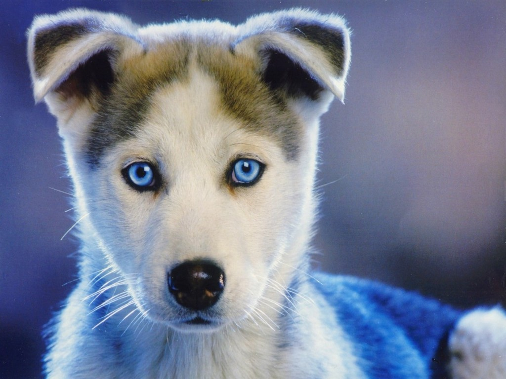Cute Puppy Backgrounds 1024x768