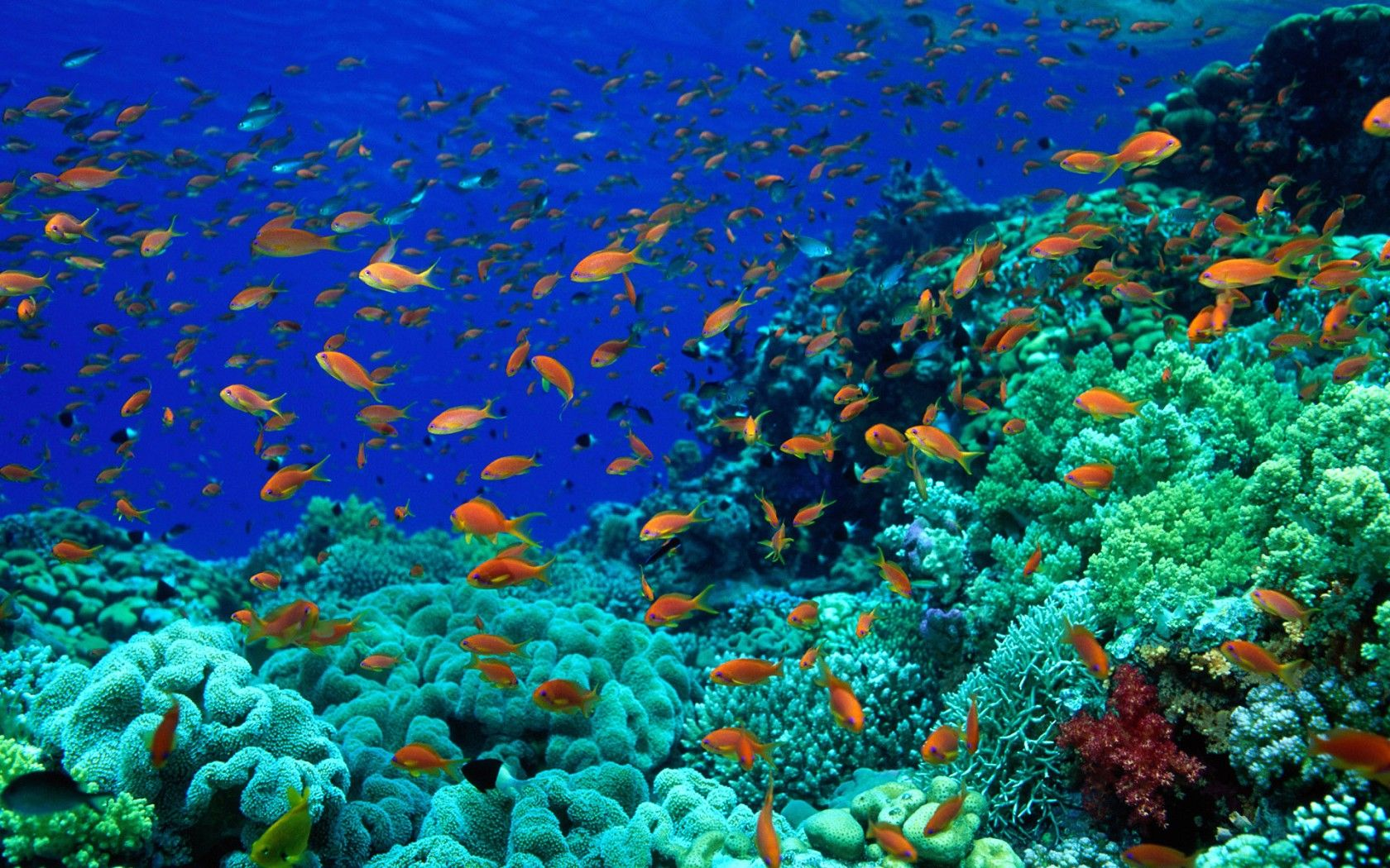 Ocean Floor Wallpaper 1680x1050