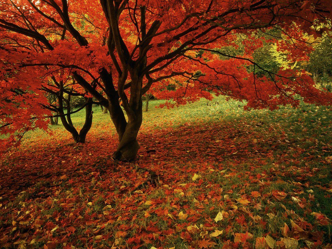 Fall Wallpaper 1280x960