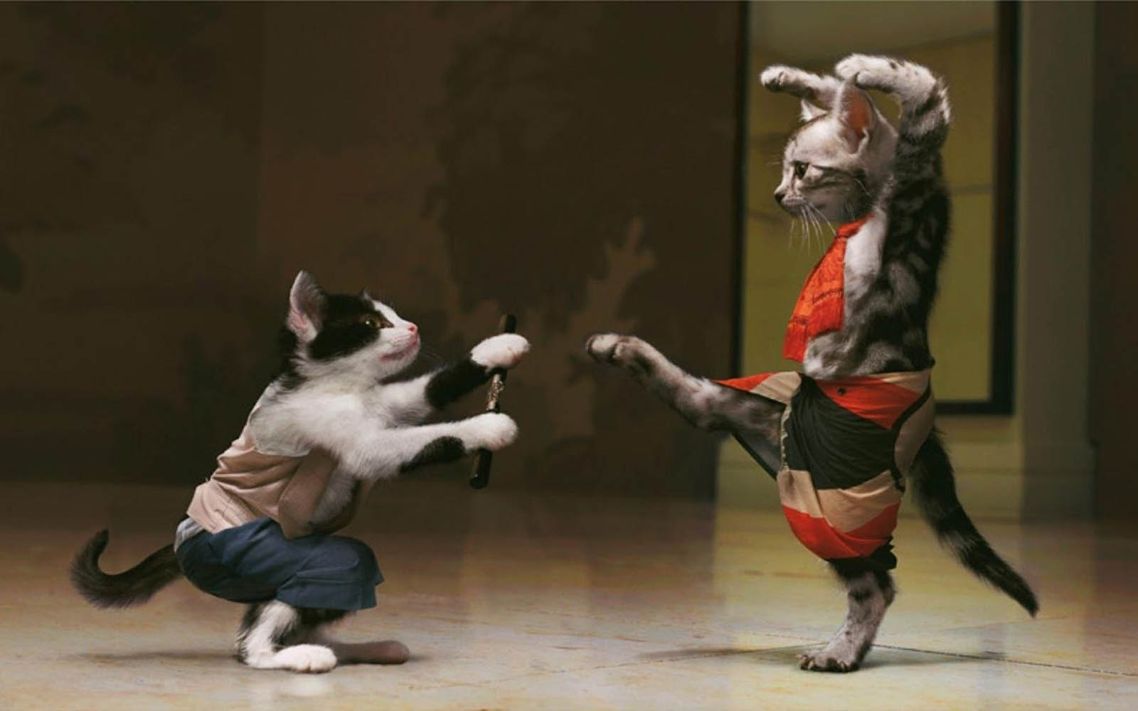 wallpapers Funny Cats Fight Wallpaper 1600x1000