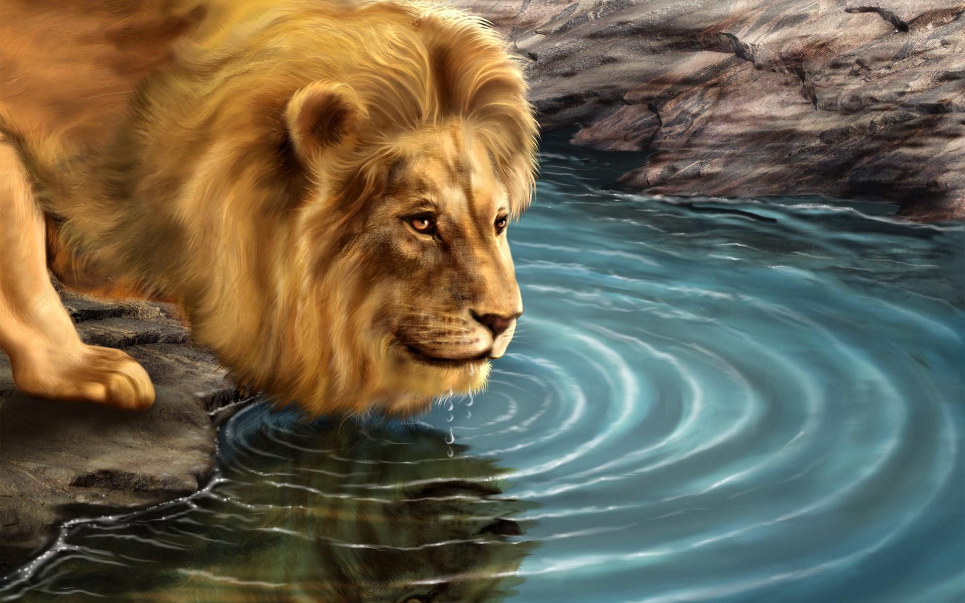 49 Free Lion Wallpaper Downloads On Wallpapersafari