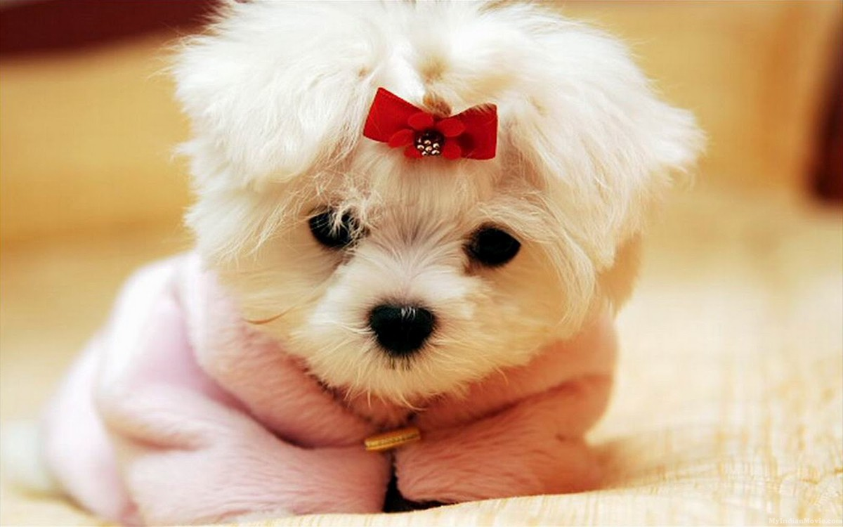 Puppy Dogs Hd Desktop Wallpapers Pictures 24 Puppy Dogs Hd Desktop 1200x750