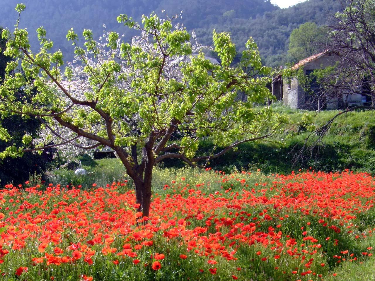 Free beautiful spring scenic wallpaper wallpapersafari - Backgrounds springtime ...