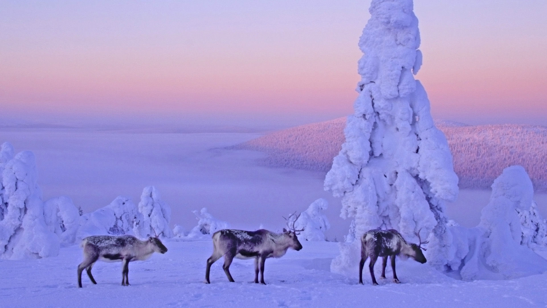 Snow Backgrounds tumblr wallpaper Snow Backgrounds tumblr hd 1920x1080