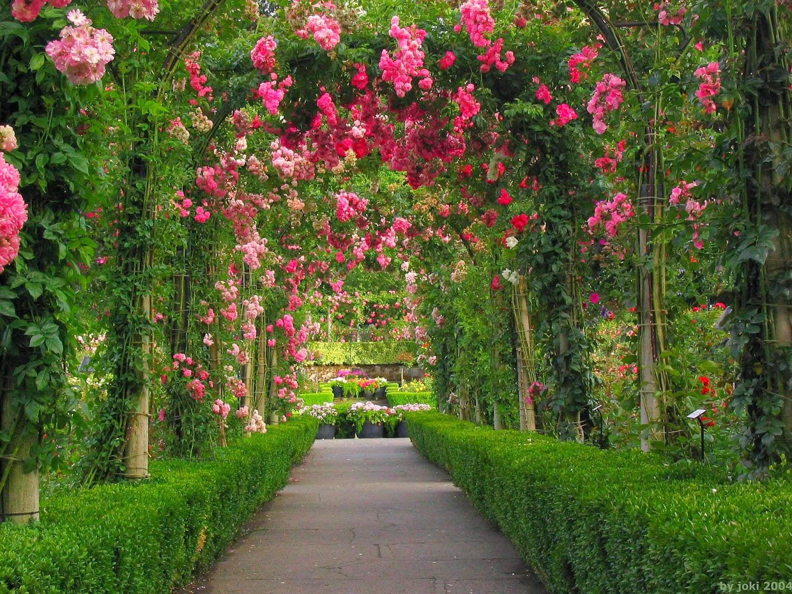 HD Wallpaper Flower Gardens - WallpaperSafari