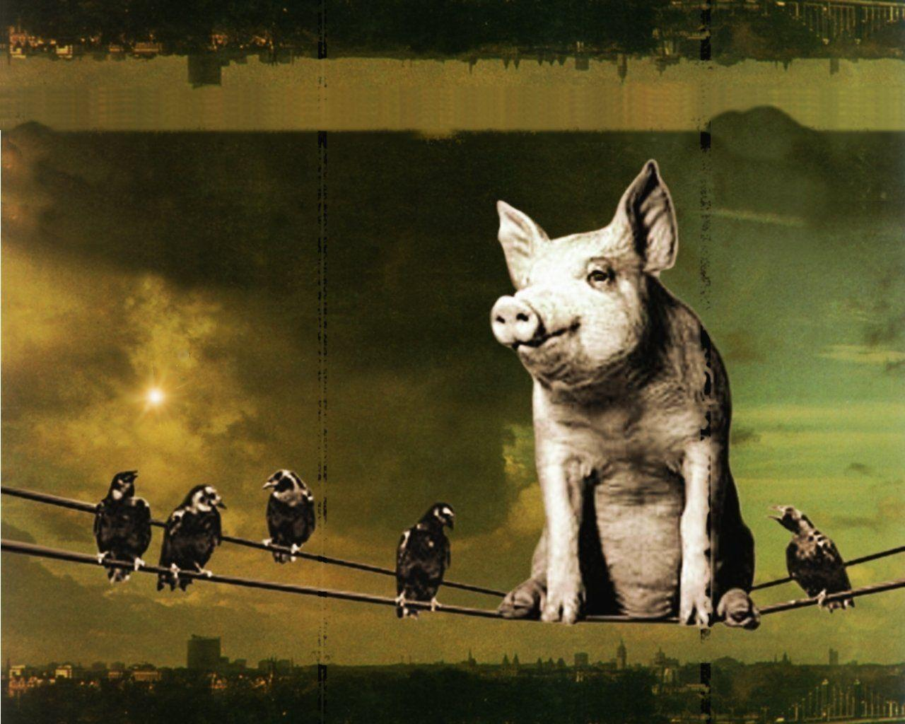 Pink Floyd Animals Wallpapers 1280x1024