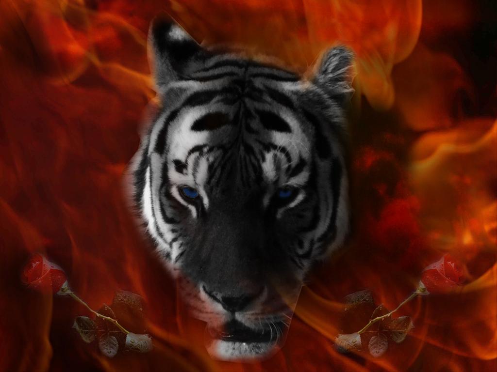Life of black tiger скачать на компьютер