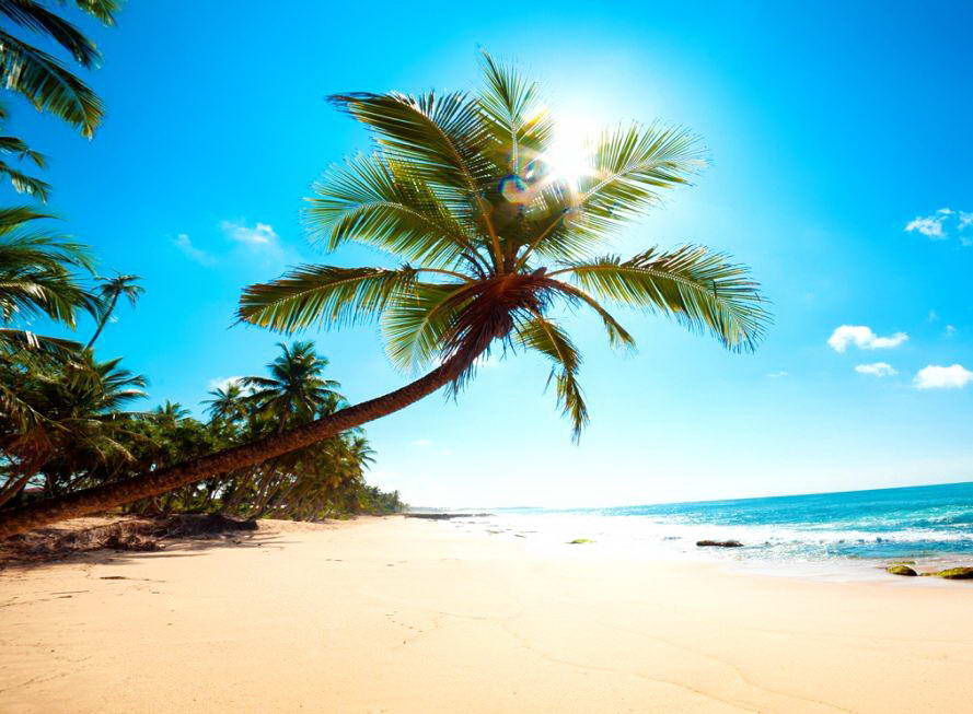 Beautiful palm tree wallpaper wallpapersafari - Free palm tree screensavers ...