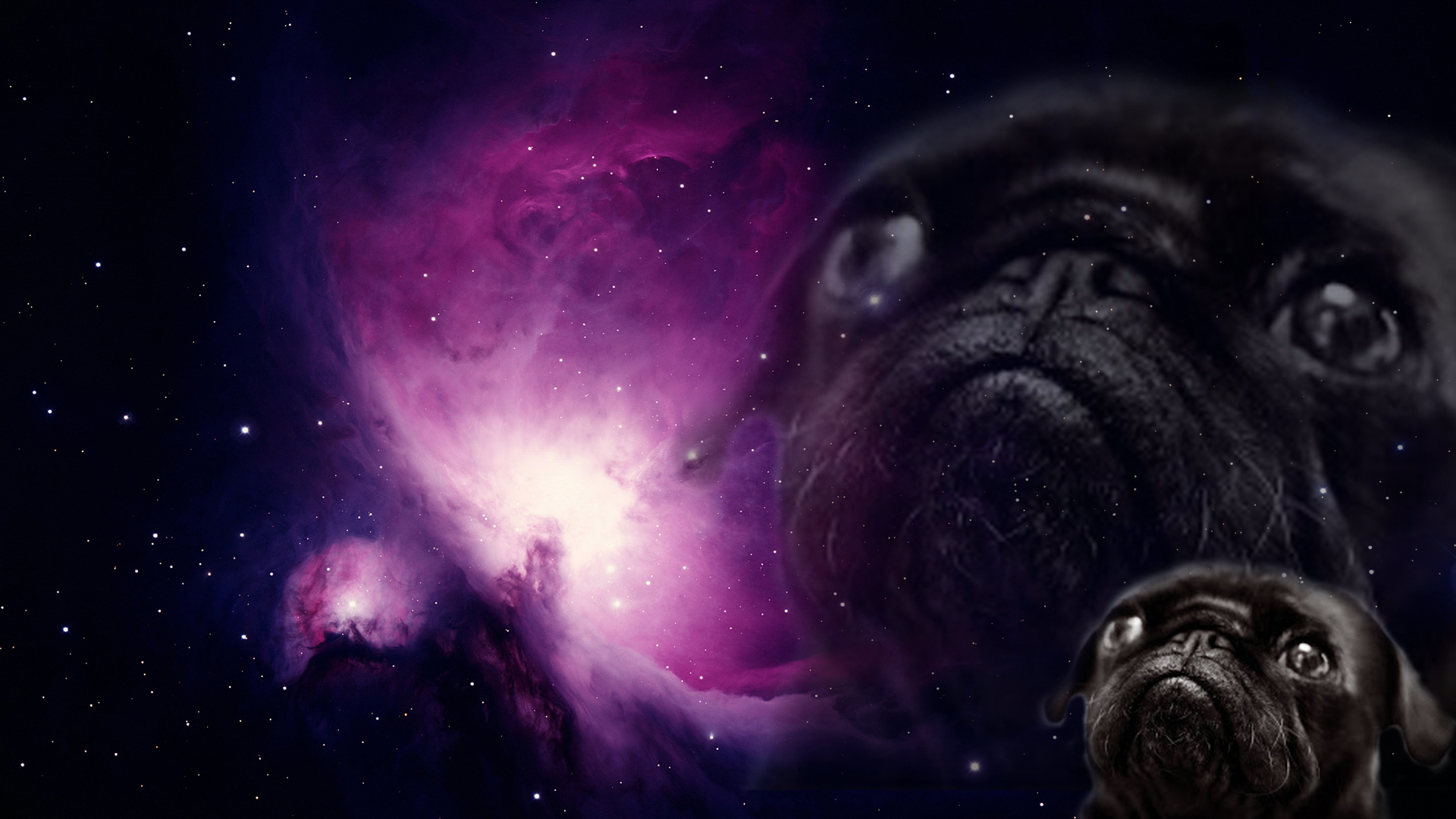 Free Download Sloth In Space Wallpaper Sloth In Space Live Slow