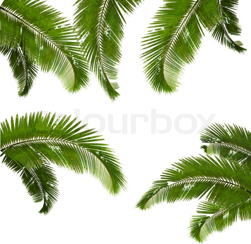 Stock vector of Set of palm leaves on white background 800x777