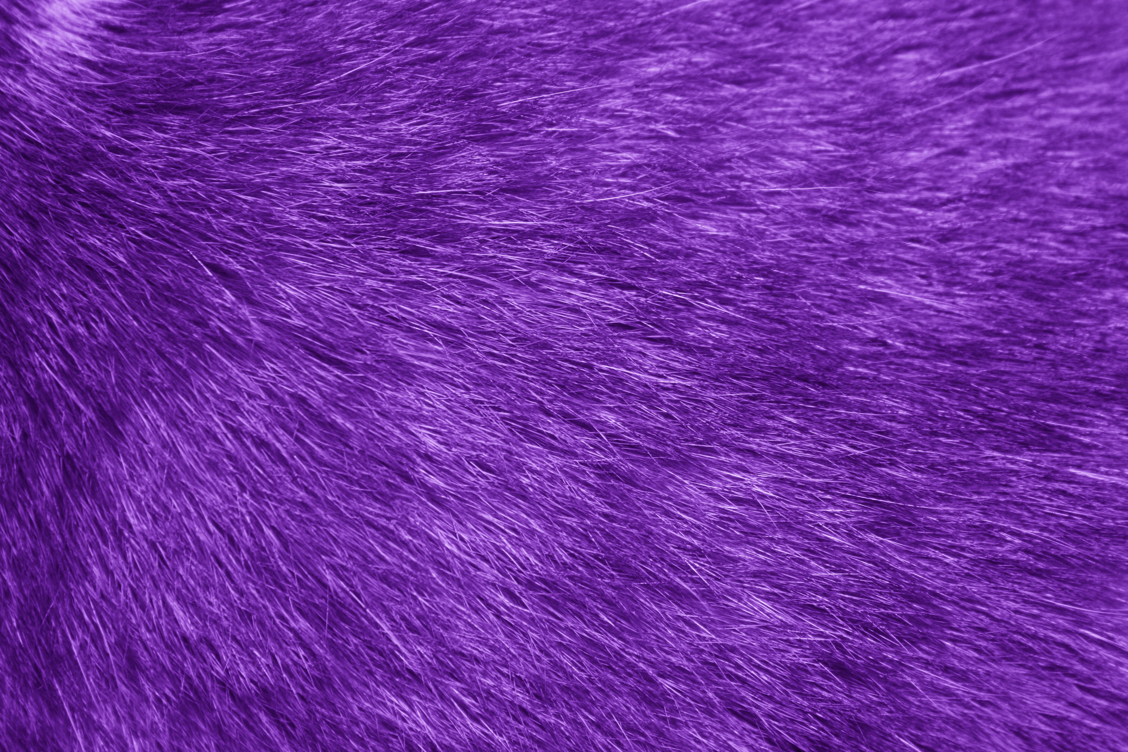 Fur Texture Purple Picture Photograph Photos 3888x2592