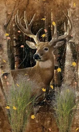 76 Deer Hunting Wallpaper On Wallpapersafari