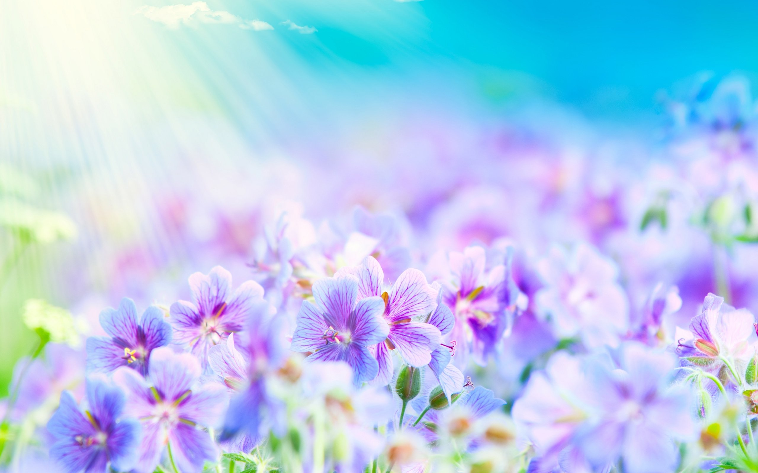 HD Flower Wallpaper Summer Flowers Wallpaper 2560x1600