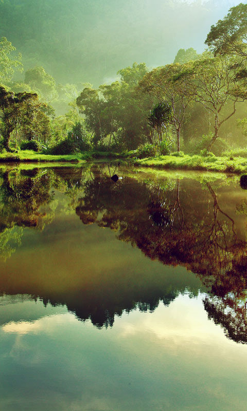 Beautiful Nature Samsung Galaxy Family Cell Phone Wallpaper 480x800