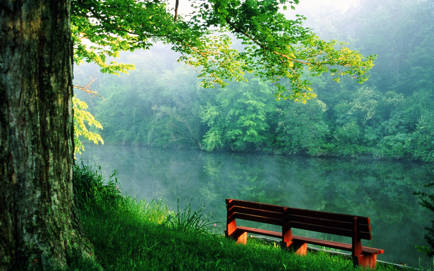 Quiet place near the river wallpapers and images 1680x1050