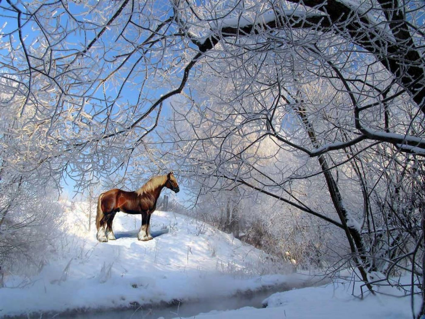 Free Download Horses Wallpapers Blog Archive Brown Horse